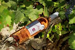 Domaine du Petit Chaumont Aigues Mortes propose des vins Rosés (® networld-Fabrice Chort)