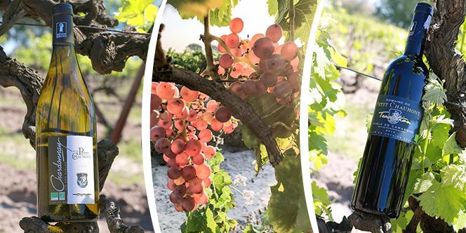 Domaine du Petit Chaumont vous informe des actualités de l'exploitation viticole.