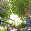 Terrasse du restaurant Le Delphis de Lattes (crédits photos: networld-fabrice Chort)